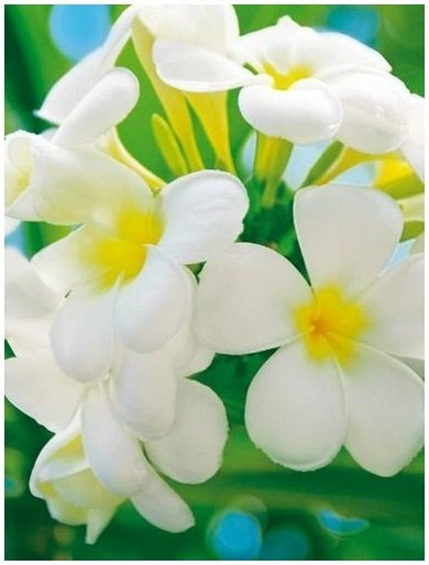 Fototapeta kwiat kwiaty fototapety