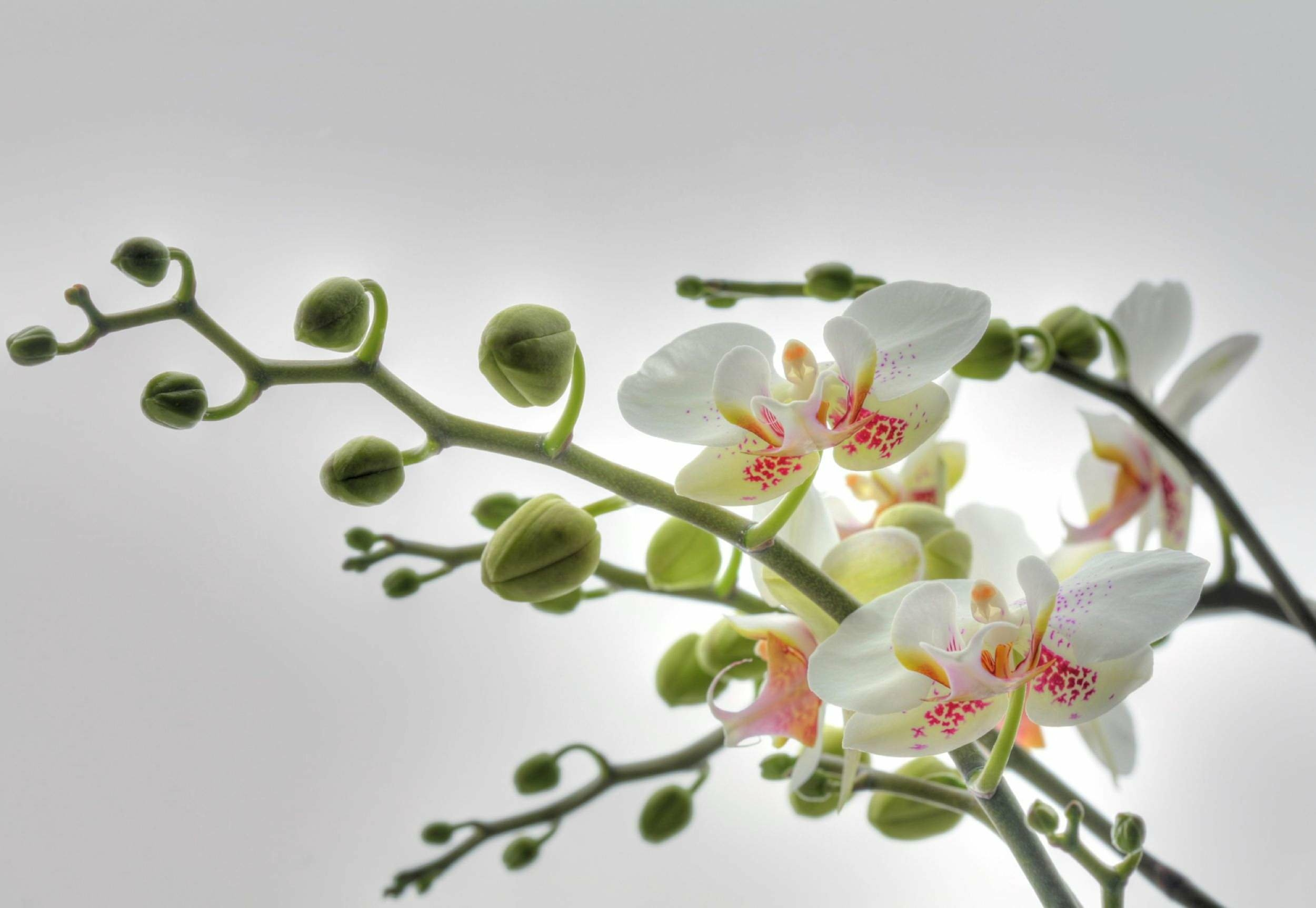 Fototapeta do salonu magnolia fototapety