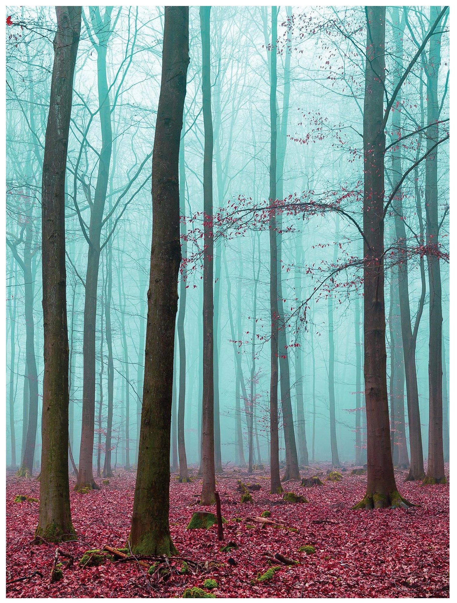 Fototapeta las drzewa liście fototapety