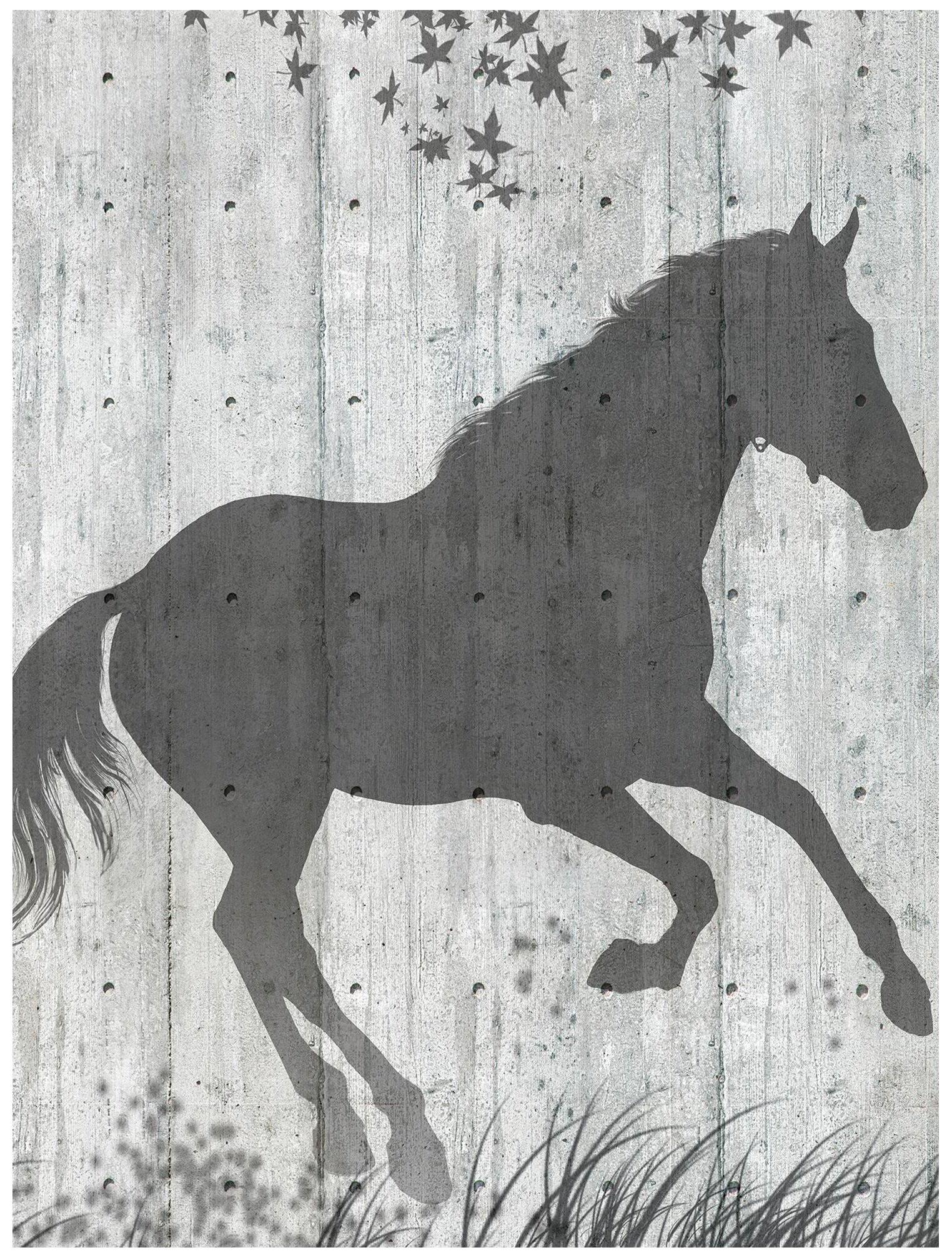 Fototapeta zwierzęta konie  fototapety
