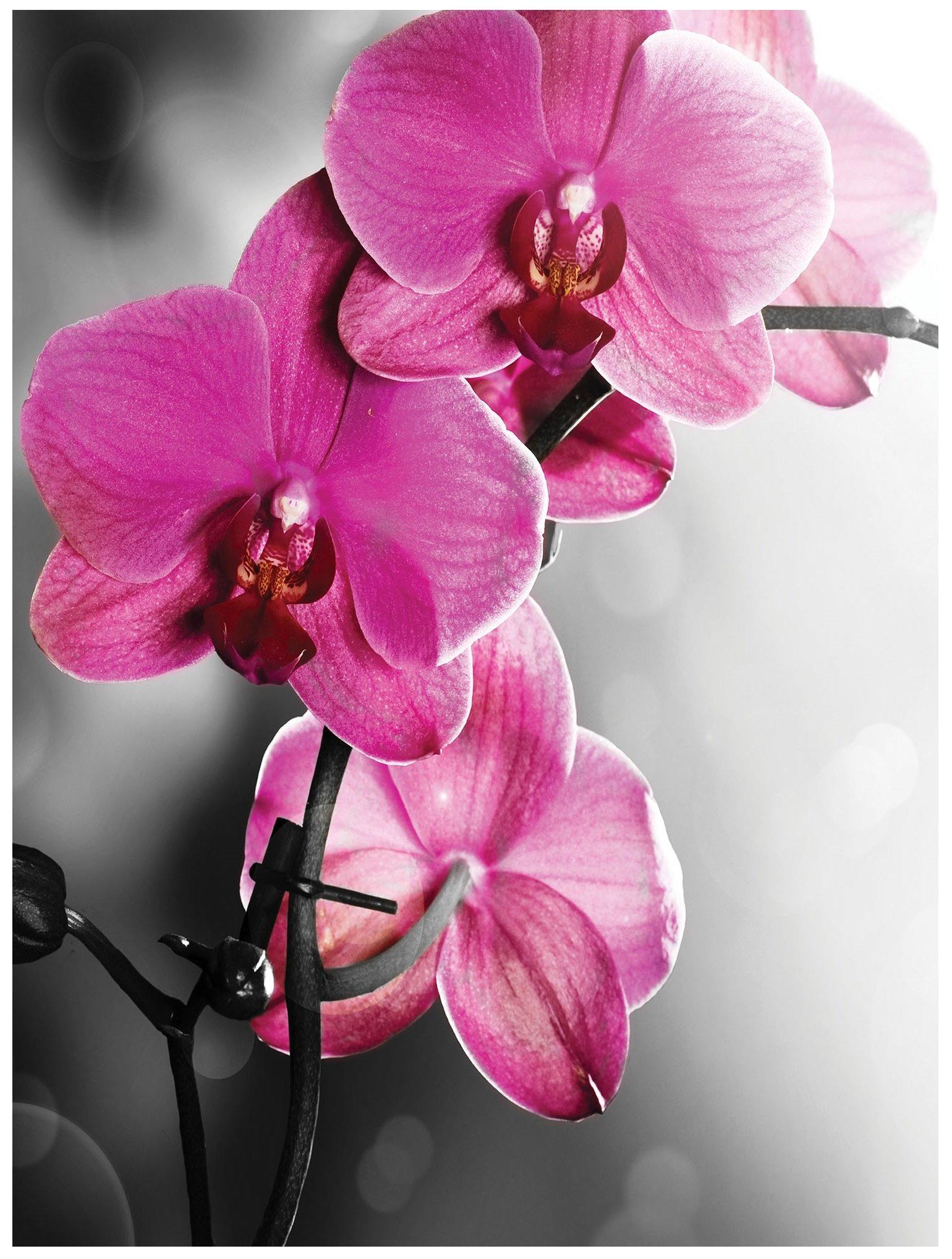 Fototapeta kwiaty kwiat liście fototapety