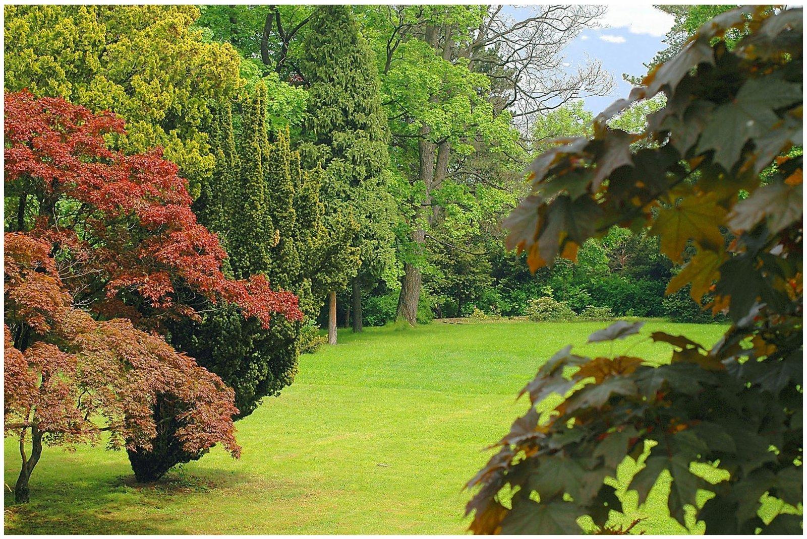 Fototapeta drzewo drzewa las liście niebo 254x184