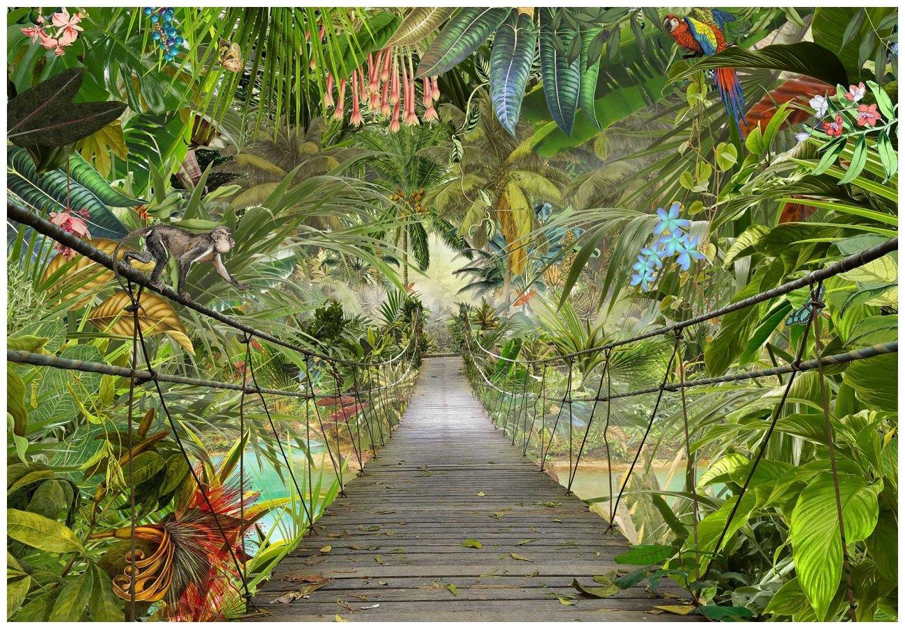 Fototapeta dżungla most liście fototapety 366x254